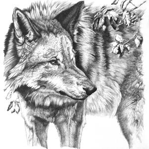 Sequoia Wolf