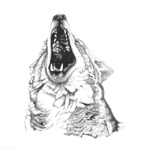 Mad Bear Wolf1