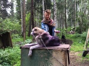 sled-dog-team
