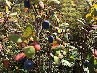 Berries 11