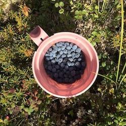 Berries 22