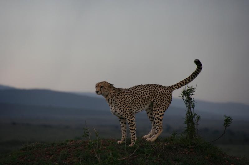Kenya 7